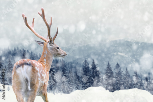 Staande foto Hert Deer on winter background