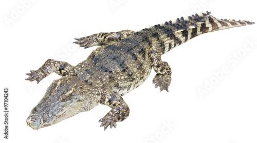 Autocollant pour porte Crocodile Full Body of Crocodile Isolated on White Background