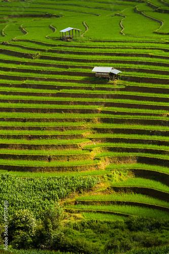 Papiers peints Les champs de riz step rice farming plantation agriculture, vertical composition