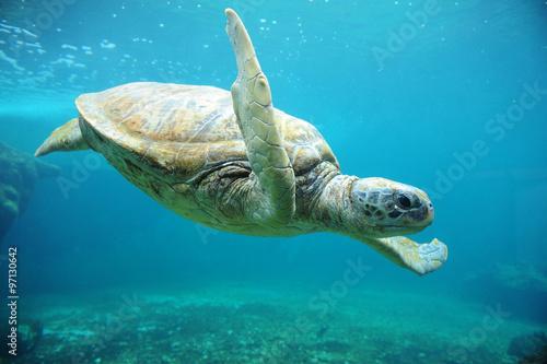Staande foto Schildpad tortue