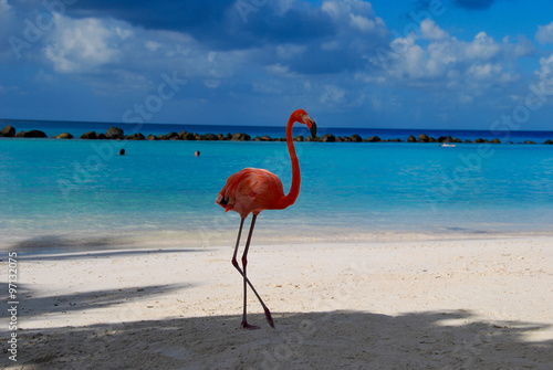 Flamingos on the Beach/ Flamingos standing close to the sea on a beach in Aruba.