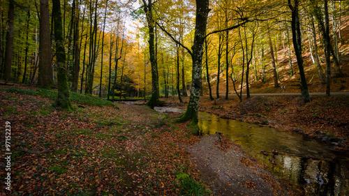 Rio que atraviesa el bosque de Quinto real en Navarra en la época de otoño