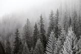 Zamarznięty zima las w mgle - 97155292