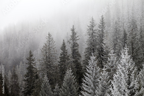 Foto auf Gartenposter Wald Frozen winter forest in the fog
