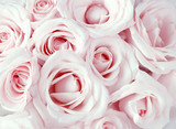 Soft full blown pink roses