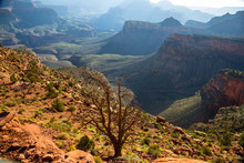 On South Kaibab Trail In The Morning, Grand Canyon, USA