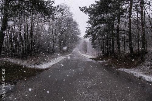 Fototapeta Pierwszy śnieg na północy Polski. obraz