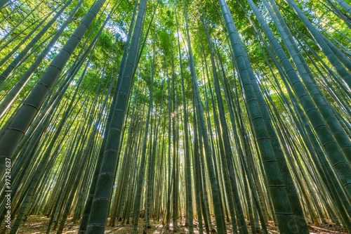 Foto op Plexiglas Bamboe Bamboo forest,natural green background.