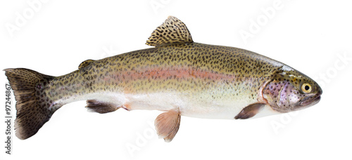 Valokuvatapetti Rainbow trout on white background