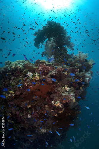 Staande foto Koraalriffen Colorful reef. Wreck ship become reef ufter 60 years underwater.