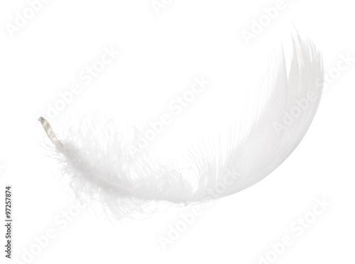 puszyste białe pojedyncze curl pióro