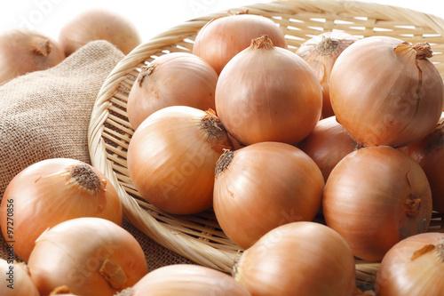 たまねぎ Onion Canvas Print