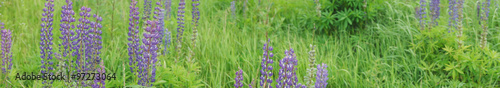 Panorama of a summer field, selective focus on left side. #97273064