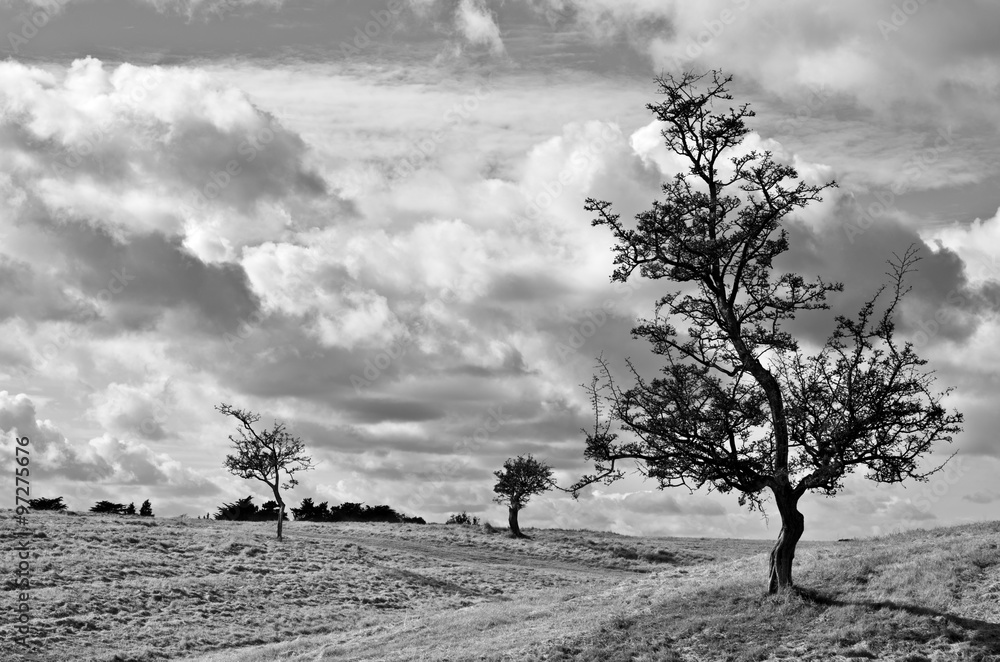 Photo  Trees silhouetted against an overcast sky.