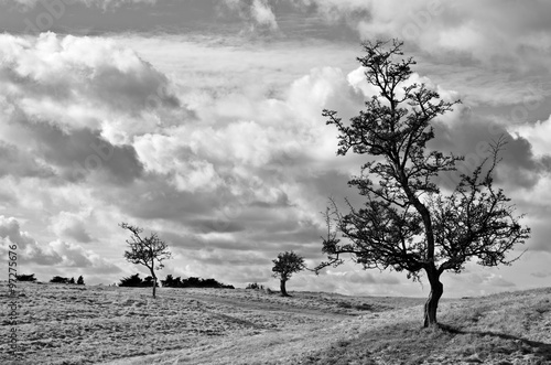 Fotografia, Obraz  Trees silhouetted against an overcast sky.