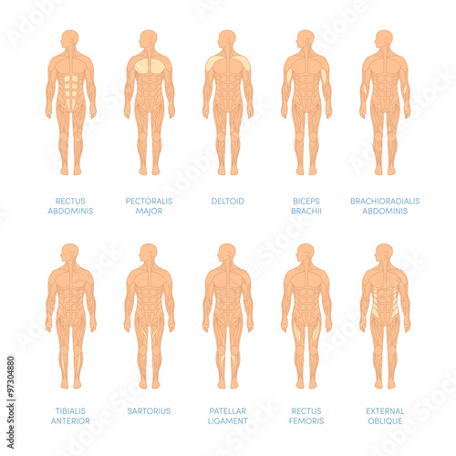 Human muscular system Tablou Canvas