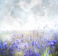 FototapetaField of flowers