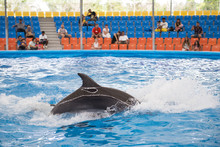 Dolphin Show At The Aquarium