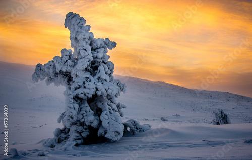 Photographie  Winter Wonderland Levi, Lapland