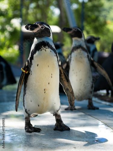 Tuinposter Pinguin penguin