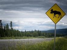 Highway Warning Roadsign Attention Moose Crossing