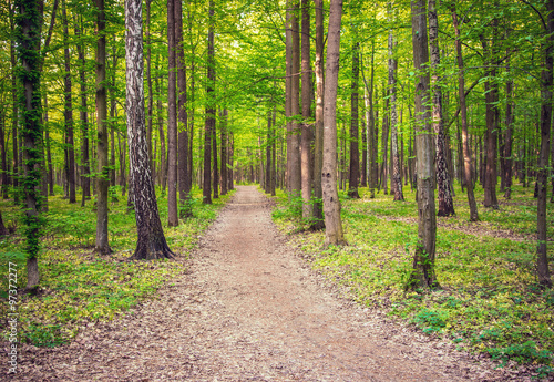 Tuinposter Berkbosje forest