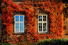 Autumn Leaves With Two White Windows On Old Facade