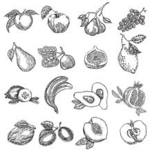 Hand Drawn Fruits. Vector Illustration. Fruit Set In Sketch.