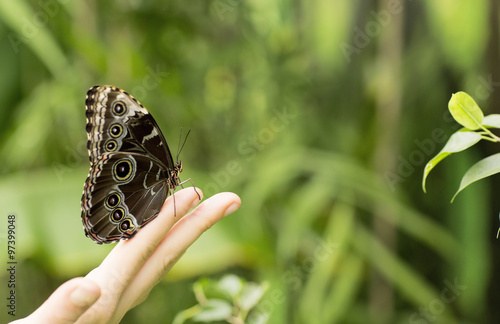 Portrait of live butterflies. Butterfly sitting on the finger of a man.