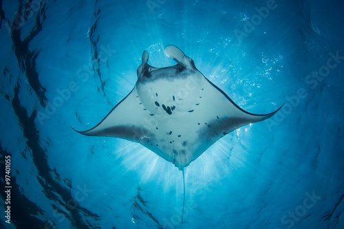 Photo A Manta Ray- Manta alfredi - swims under the sun creating an eclipse