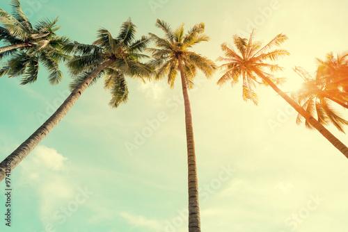 Foto auf AluDibond Palms Vintage nature photo of coconut palm tree in seaside tropical coast