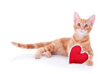 Valentine's Day Cat Holding Valentine Heart