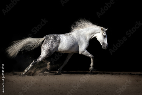 Papel de parede White horse with long mane in desert dust trotting