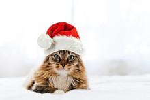 Christmas Cat In Red Santa Claus Hat