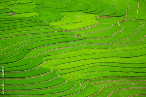 Garden Poster Rice fields argriculture of green terraced rice fields in mountain of sapa vietnam in aerial view