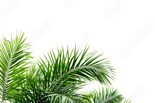 Recess Fitting Palm tree Palm leaves isolated on white