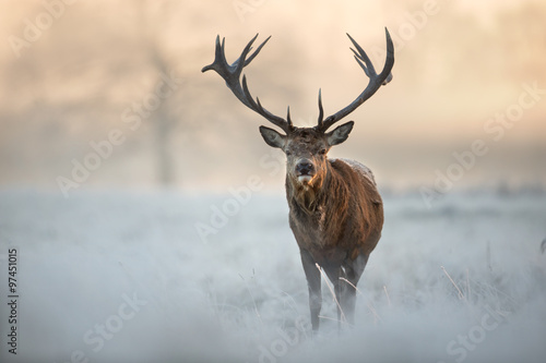 Tuinposter Hert Red deer in winter