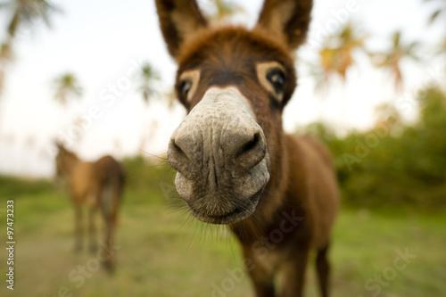 Poster Ezel Donkey