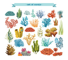 Set Of Colorful Corals And Alg...
