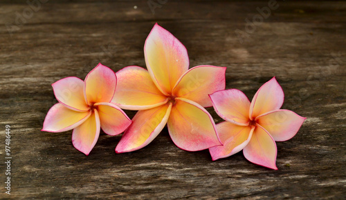 Spoed Foto op Canvas Frangipani Three Plumeria flower on wood board