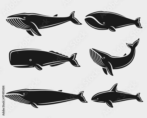 Fotografie, Obraz  Whale set. Vector