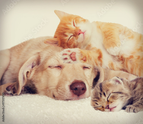Poster Chien sad puppy and kitten lying