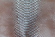 Brow Snakeskin Pattern Texture