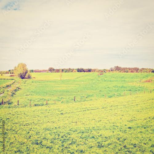 Fotobehang Zwavel geel Pasture