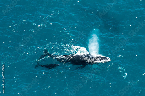 фотография  Humpback whale mother and calf, St. Mary's Island, Madagascar