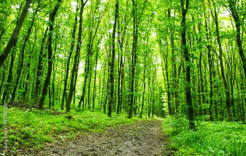 Foto op Plexiglas Groene Forest background