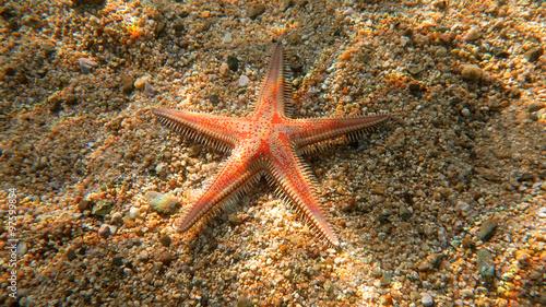 Alive starfish - underwater photo