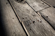 Old wood texture, wood texture background