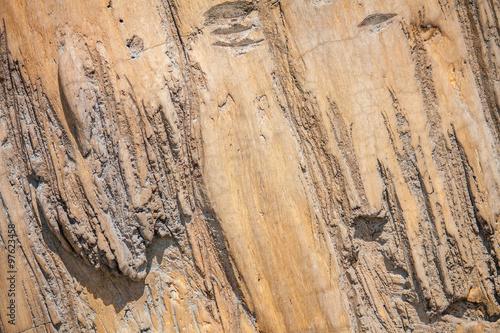 Canvas Prints Textures Wood Texture