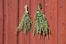 Bundles Of Fresh Herbs Hanged ...